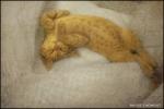 17_sleeping-e.jpg
